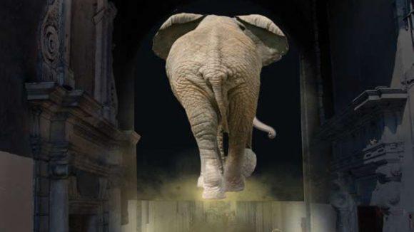 elephant de dos