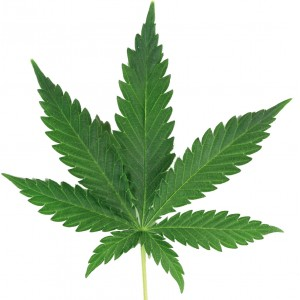 sticker-feuille-de-cannabis