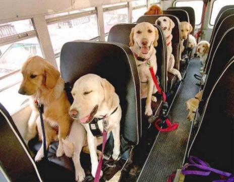 Tout-le-monde-dans-le-bus