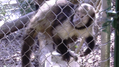 coulisses du zoo