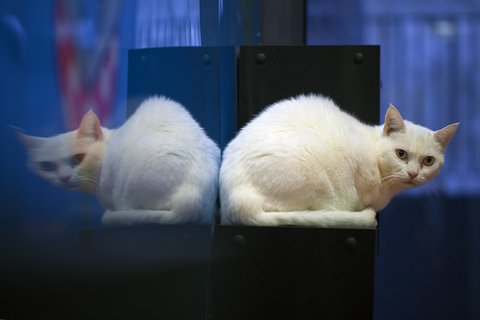 RommerHotel pour chat