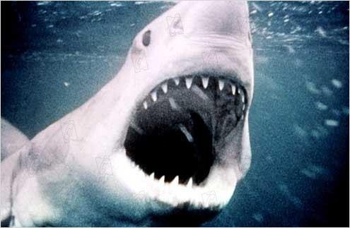 Les dents de la mer - le requin tueur
