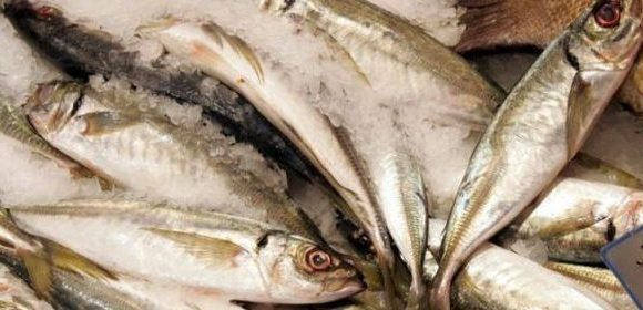 poissons surgelés