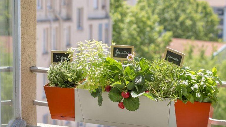 Jardinière Botanic