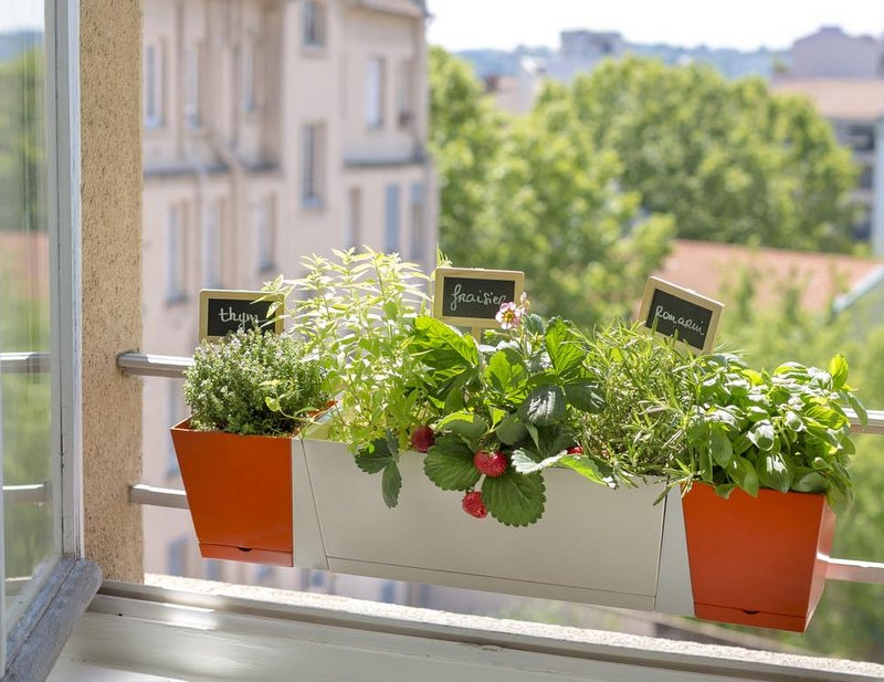 Shopping à Lyon : 10 adresses pour le jardin |