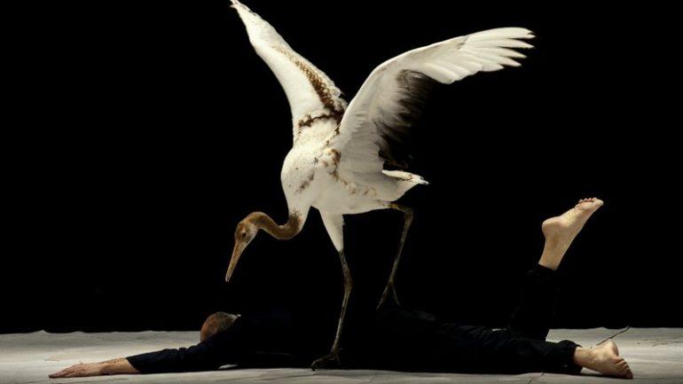 Light Birds Luc Petton duo