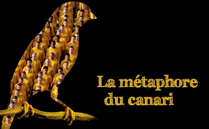 Métaphore canari Claire Truche