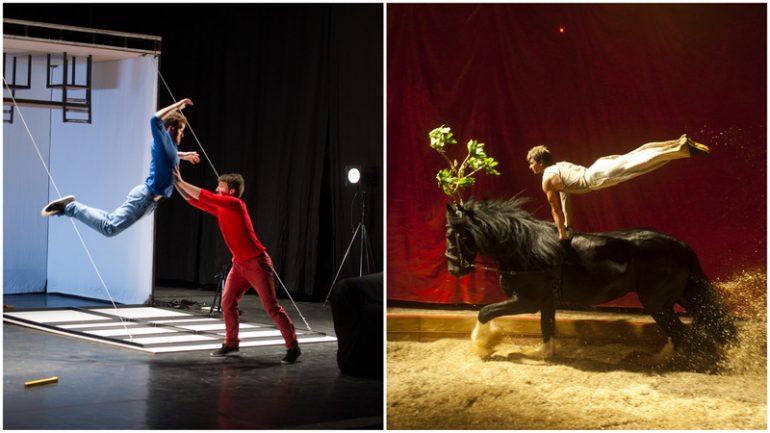 cirque Dausse Lemoine Idées grises Pagnozoo Boléro