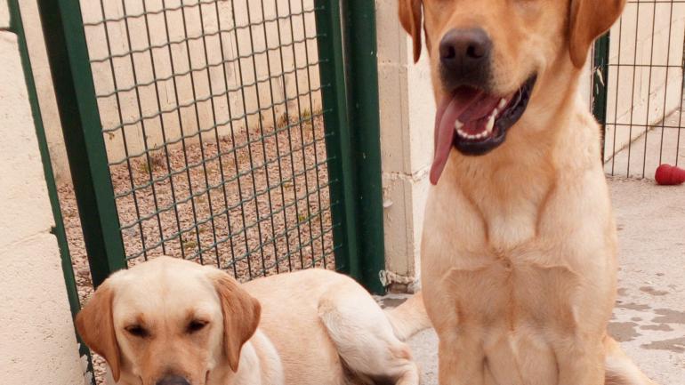 Natcho et Lully, deux chiens heureux ©CC