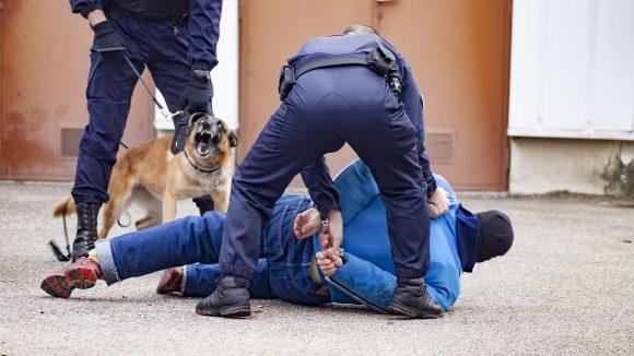 faits-divers arrestation chien