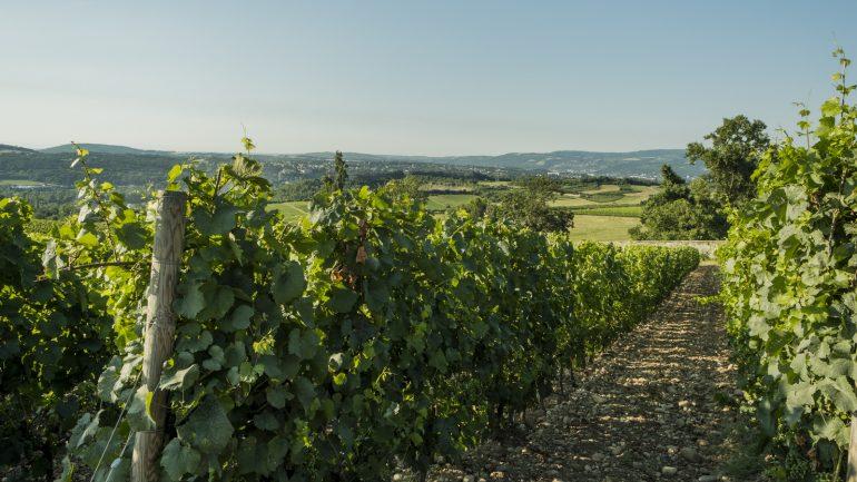 Vignobles des coteaux du Lyonnais © Tim Douet