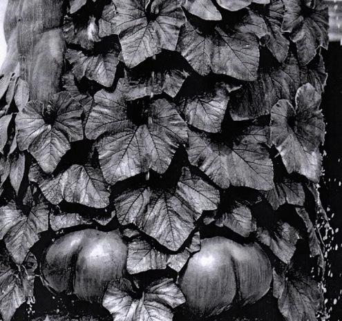 Le Buisson ardent – Bas de la sculpture-fontaine de Geneviève Böhmer (place Guichard, Lyon3e) © DR