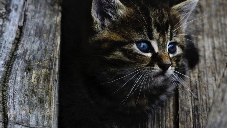 Chat mignon association chaton