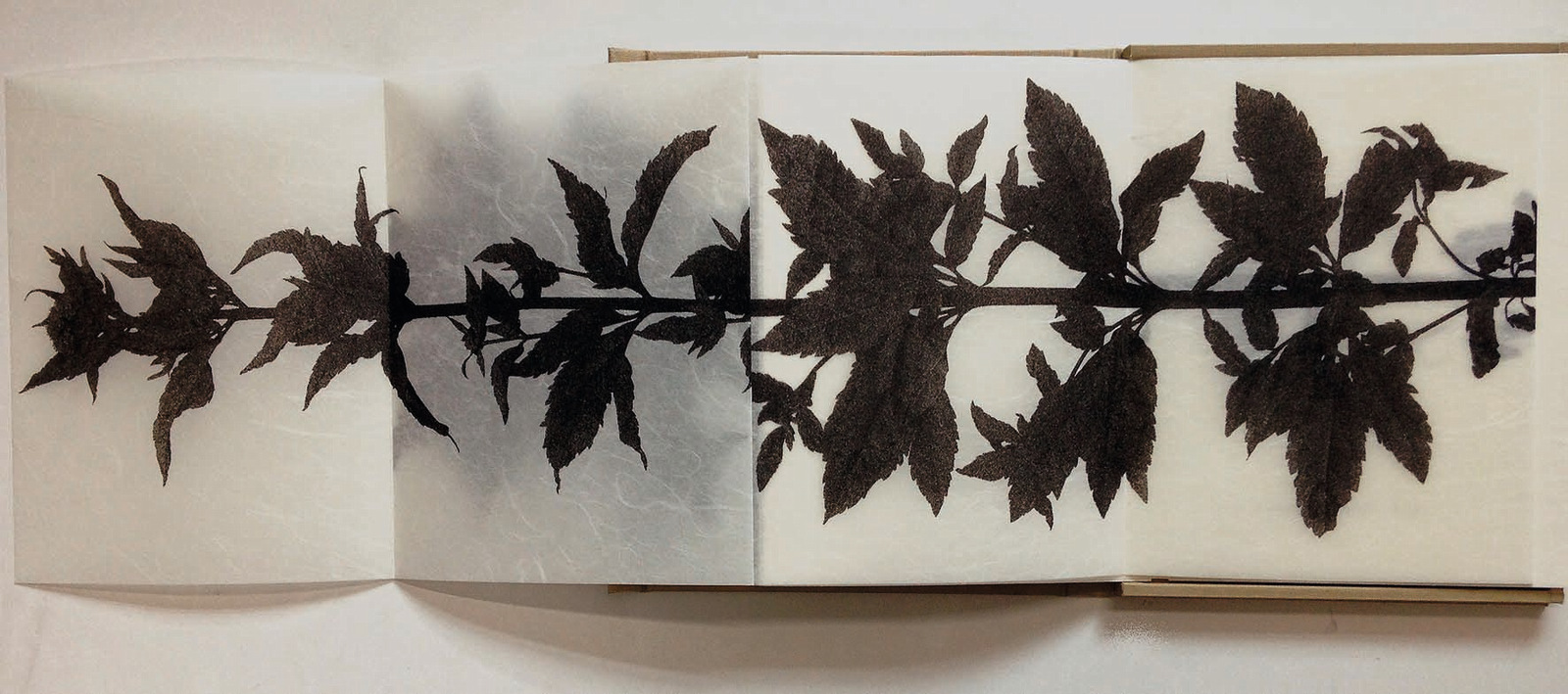 Motoko Tachikawa – Unwanted Plant.