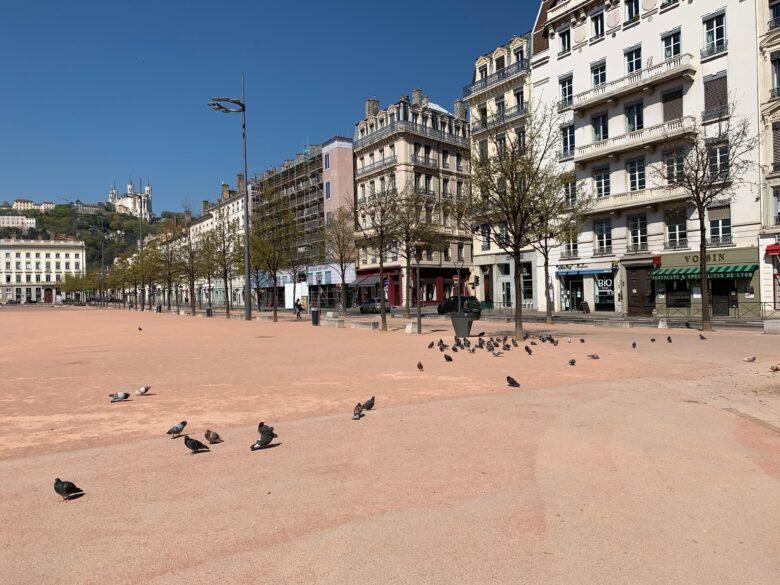 Pigeons place Bellecour à Lyon