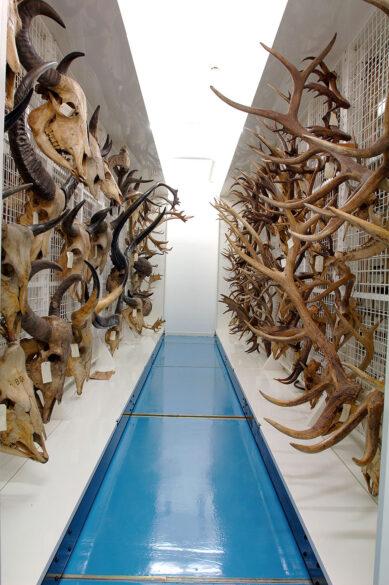 Musée des Confluences - centre de conservation