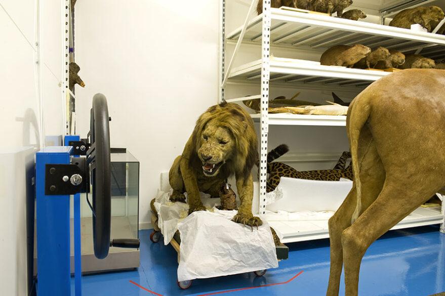 Centre de conservation et d'étude des collections