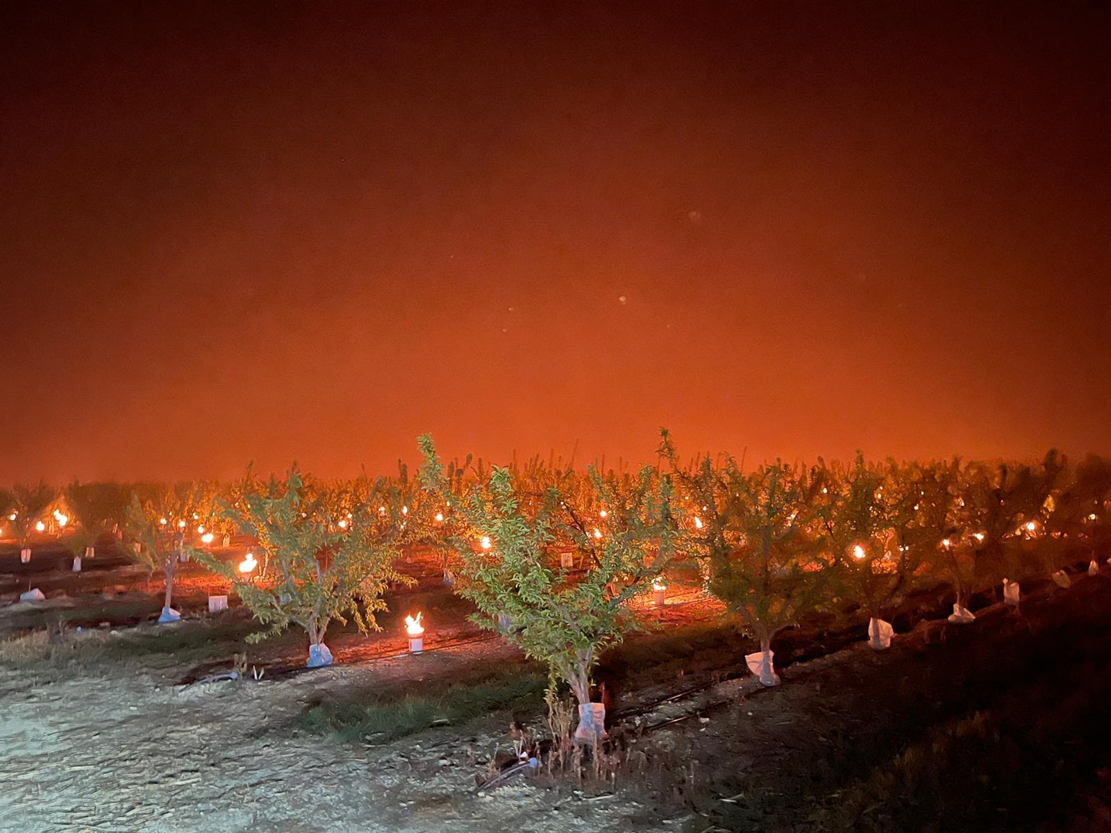 la plus grande catastrophe agronomique de ce début de XXIe siècl